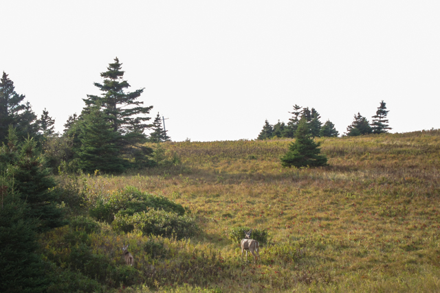 2013Oct22_Lawrencetown Beach_19