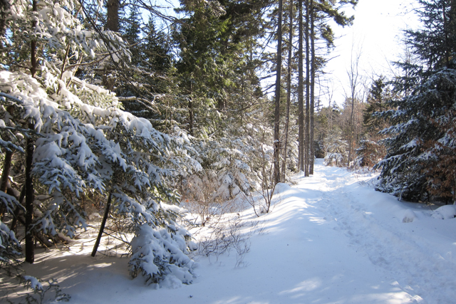 2014Jan04_Shubie Walk06