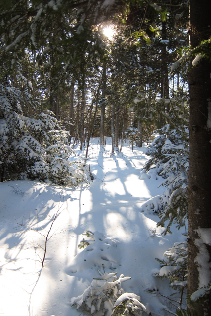 2014Jan04_Shubie Walk07