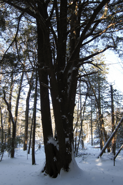 2014Jan04_Shubie Walk10