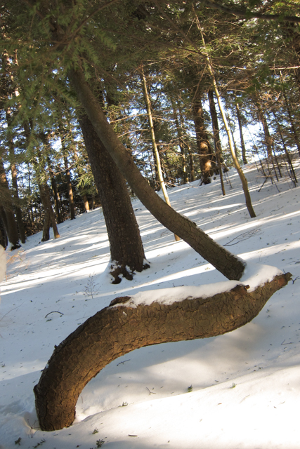 2014Jan04_Shubie Walk11