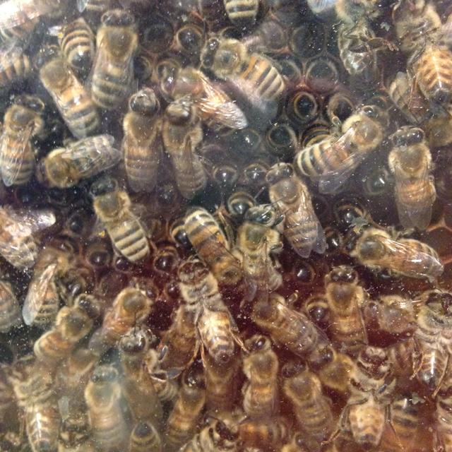 Bee-bums