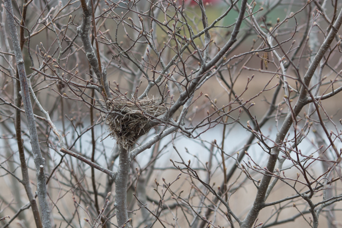 09May2015_Bird Count_01