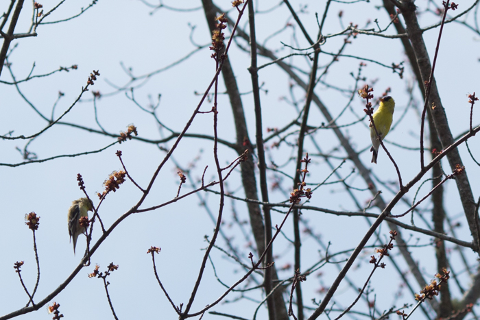 09May2015_Bird Count_137