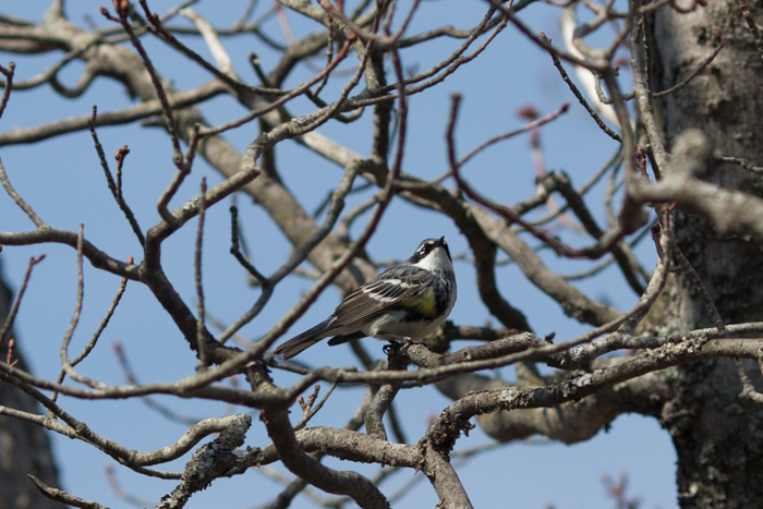 09May2015_Bird Day_264